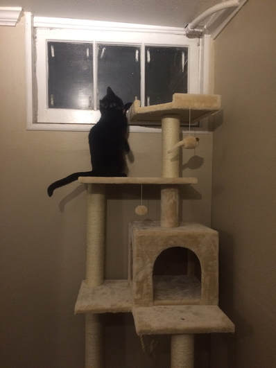 Cat playing on her new cat tree
