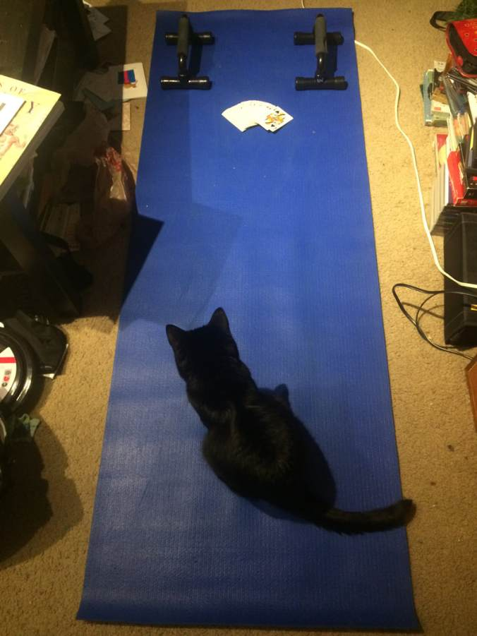 Picture of yoga mat with push-up bars, a deck of cards, and a cat