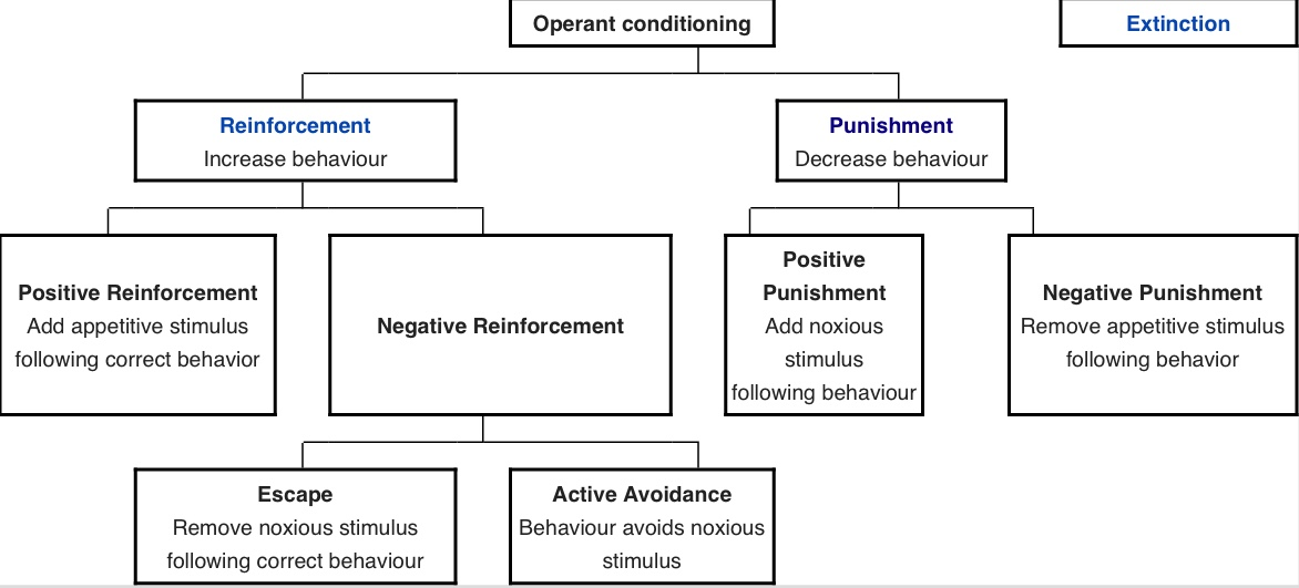 An organizational graph of operant conditioning from Wikipedia.