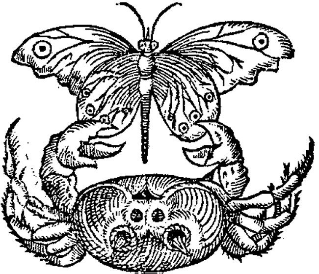 An ink drawing of a crab holding on to a butterflys wings